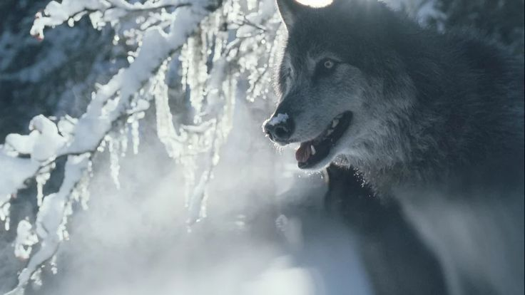 SHANGRI-LA WOLVES on Vimeo