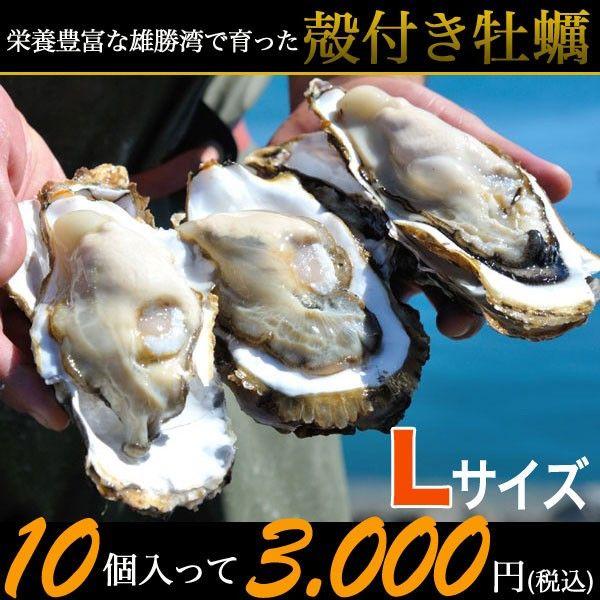 三陸石巻雄勝の浜でとれたプリプリの牡蠣を味わう!       殻付き牡蠣(Lサイズ:200~280g) 10個~かき/カキ/産地直送