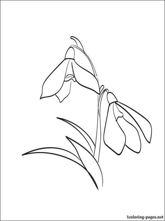Snowdrops Colorin Page Coloring Pages Free Printable Coloring