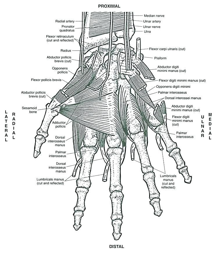 Human Anatomy Coloring Book Awesome Anatomy Colouring Book Kapit Photos Anatomy Coloring Book Anatomy Images Cool Coloring Pages