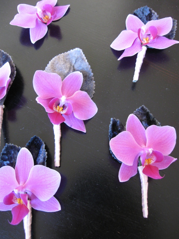 Mini orchid boutonnieres with velvet leaves