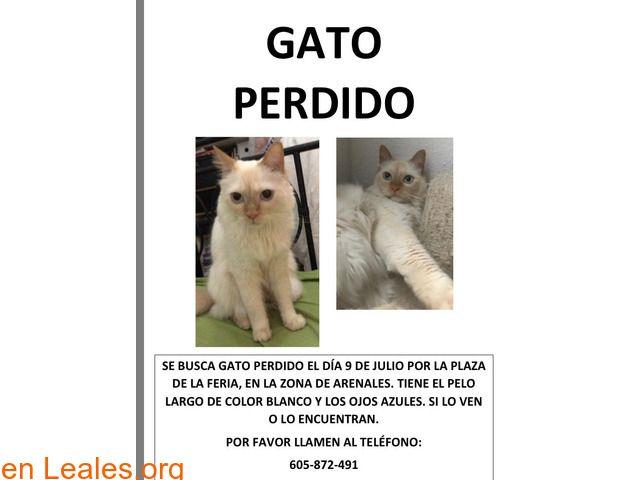 Gatos Machos Perdidos Espana Las Palmas Gran Canaria