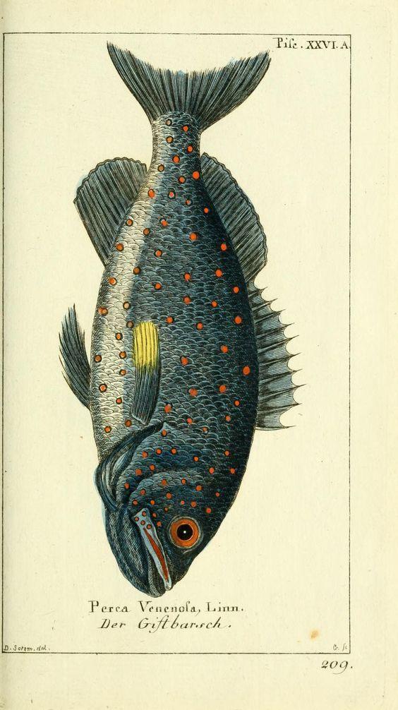 Imprimolandia: Láminas de peces para imprimir