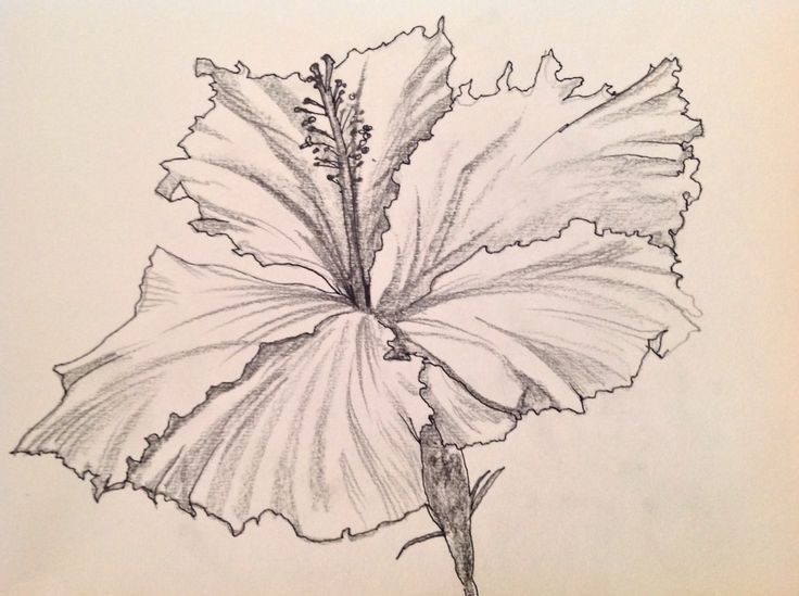 Black Line Flower Drawing : Single flower drawing at getdrawings free for personal use