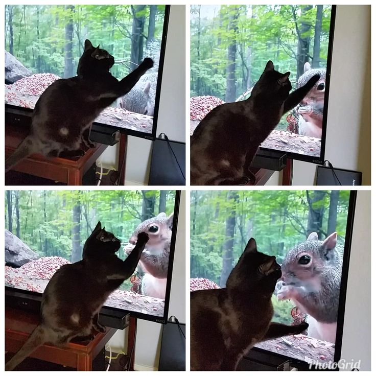 Salem loves when I play the squirrel videos for her http://ift.tt/2nbzzfx