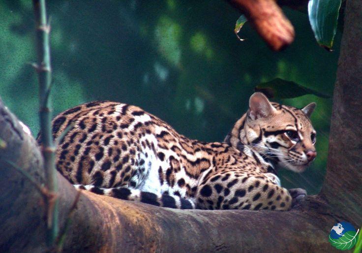 La Amistad National Park in Costa Rica & Panama