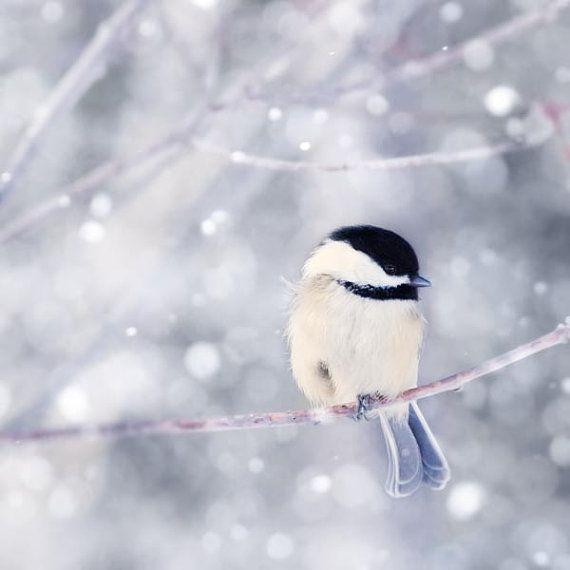 Winter Photography Bird Print, Winter Art, Animal Photography, Nature, Chickadee Art Print, Woodland Animal, Holiday Wall Decor, Wall Art