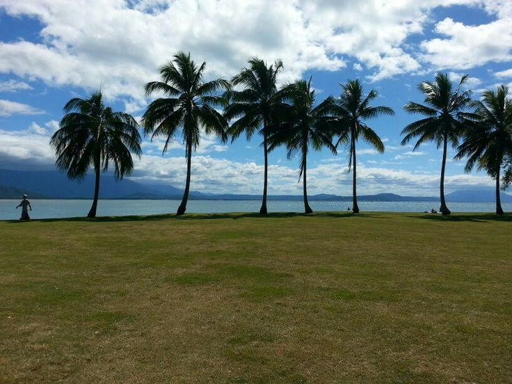 Seven palms trees in Cairns North Queensland.
