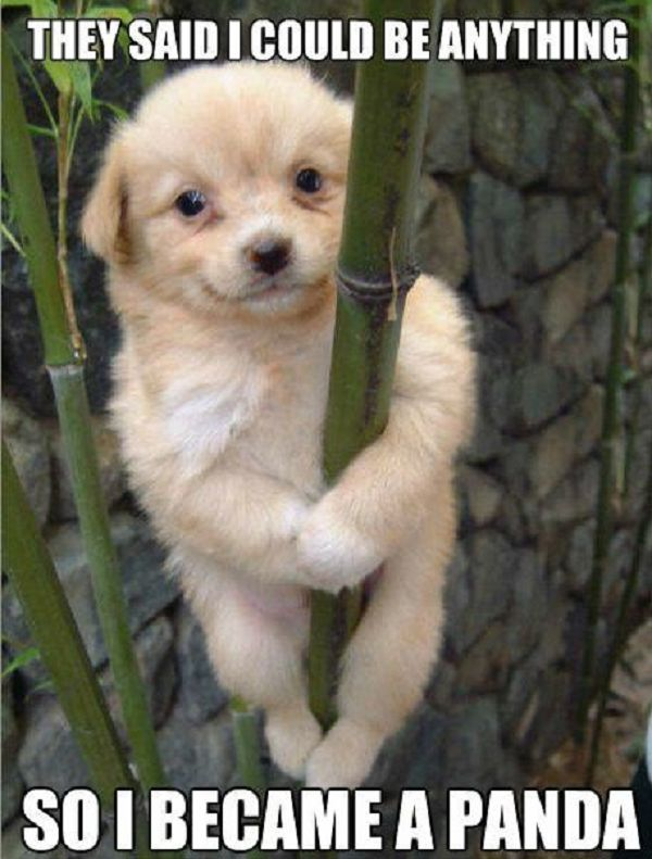 Awww what an adorable panda puppy! ~ See more @ www.FunnyOnlinePictures.com ~