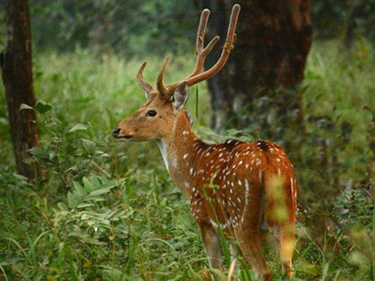 Gugamal National Park - in Amaravati, Maharashtra, India