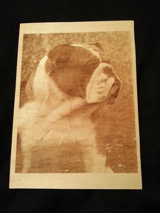 Photo of Bulldog laser engraved on to 6mm plywood size is A4