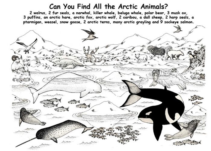 spot the arctic animals animal coloring pagescoloring - Arctic Colouring Pages
