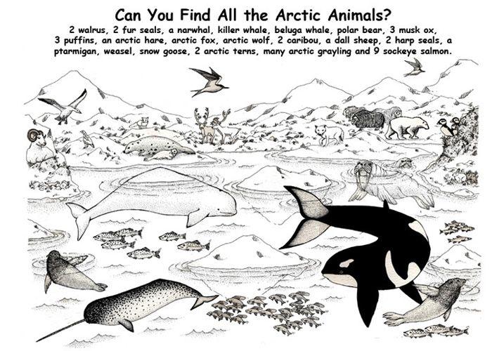 163 best Arctic Animals images on Pinterest | Preschool winter ...