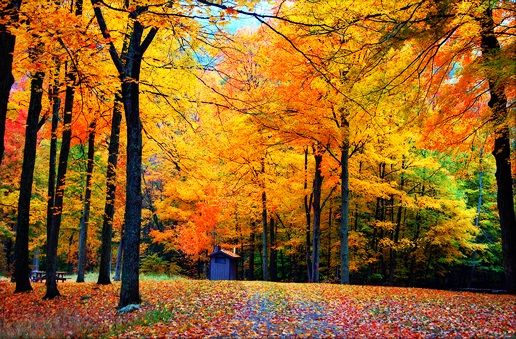I Ve Heard That The Fall Landscape Of Northwest