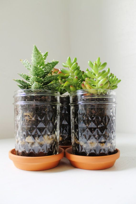 Mason Jar Planter Trio with Drainage  UpCycled by BootsNGus, $15.00
