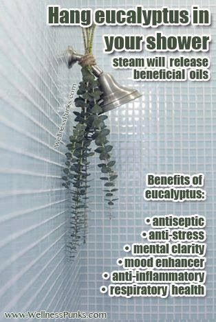 TRICK: Great tip! Hang Eucalyptus in your shower. The steam releases many beneficial oils and it smells amazing too!