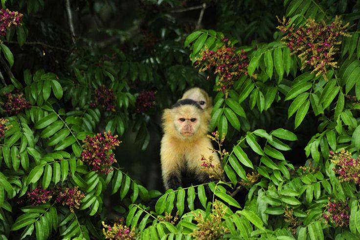 Eco-Canal Tour to Gatun Lake from Panama City Hotels