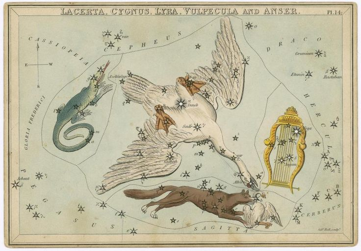 Urania's Mirror, or a View of the Heavens, one of a set of thirty-two engraved and hand-coloured tissue-backed celestial charts for educational use by novice astronomers, engraved by Sidney Hall and published by Samuel Leigh, London, c. 1823, entitled 'The constellations Lacerta, Cygnus, Lyra, Vulpecula and Anser'