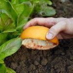Découvrez dès maintenant une astuce écologique pour prévenir les futures invasions de limaces cet été.