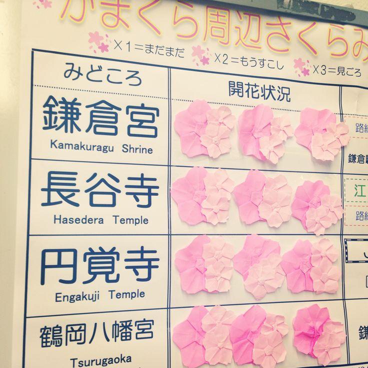 now blooming @ kamakura station