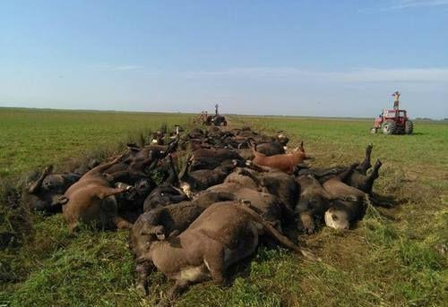 Ola de Calor: cerca de 200 animales muertos por el calor en los últimos días