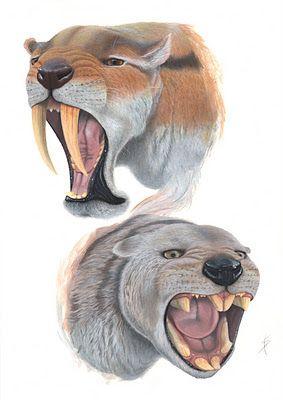 Dos Marsupiales Extintos _ Saul Velasco Martel