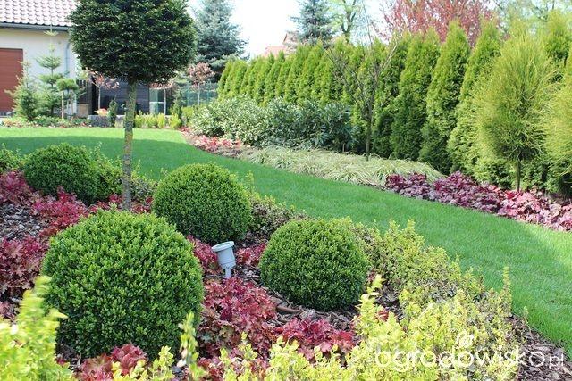 Ogród Sylwii od początku cz.II - strona 996 - Forum ogrodnicze - Ogrodowisko