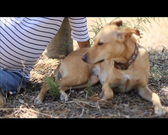 Embarazo Cristina- Olivos by Berta Cabezas Llacer    Videos y fotos de embarazo en Barcelona  www.bertaheads.com