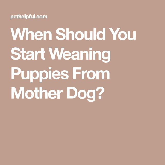 When Should You Start Weaning Puppies From Mother Dog?
