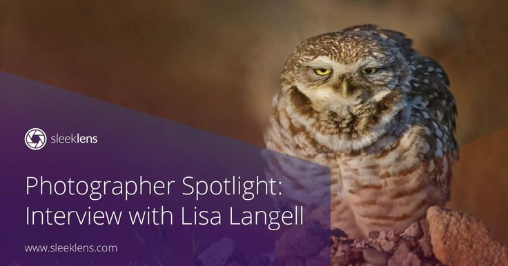 Welcome to another photographer spotlight interview! Lisa Langell is a wildlife photographer from America. Get to know all her tips and tricks!