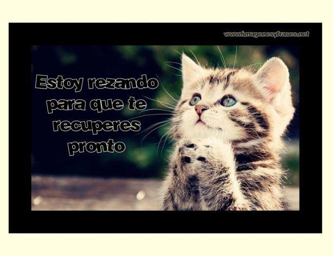 Pin de Armando Pedraza en Frases | Animals, Kittens cutest ...