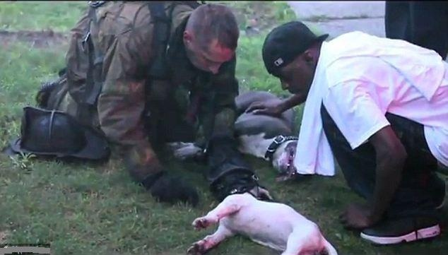 There Are Many Hero's Amongst Us. Detroit 2012    The moment selfless firefighter resuscitates dog after removing his OWN oxygen mask to save two dying animals.