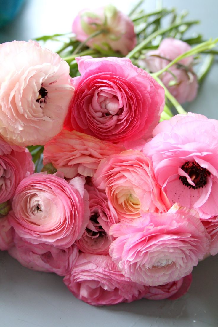 Check out these pretty in pink ranunculus in some of our arrangements at Farmgirl Flowers. Order now at www.farmgirlfowers.com