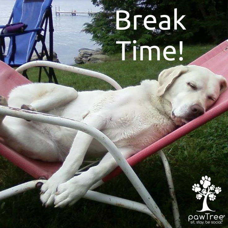 3 o'clock #breaktime Time to grab some coffee or a power nap! :) https://multibra.in/cf2zg #pawtree #sleepypuppy