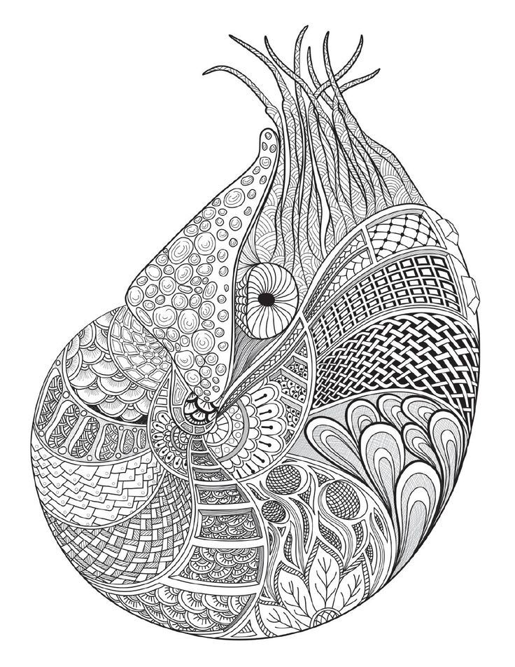 1958 best Coloring pages images on Pinterest Horse drawings - copy coloring page of a tiger shark