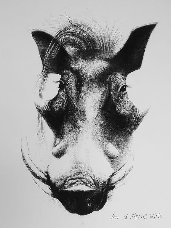 """Saatchi Online Artist: Ira van der Merwe; Charcoal, 2013, Drawing """"Vlakvark"""""""