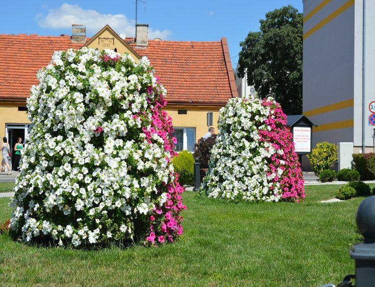 Terra Flower Power | Wieruszów