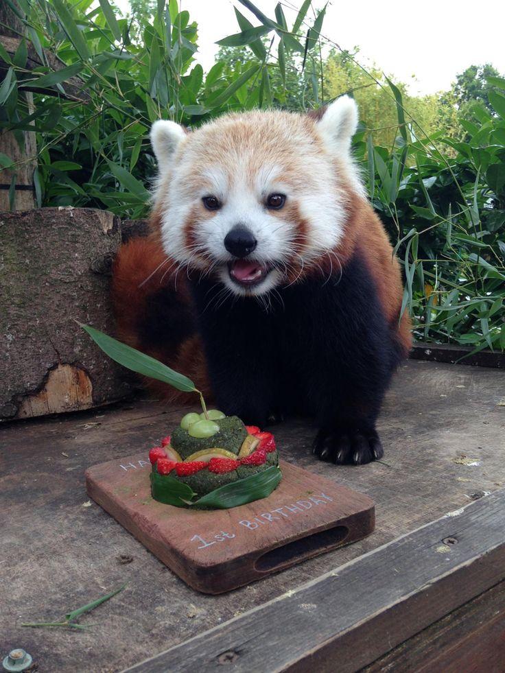 birthday 1st birthday cakes happy birthday panda rossi kleiner panda ...