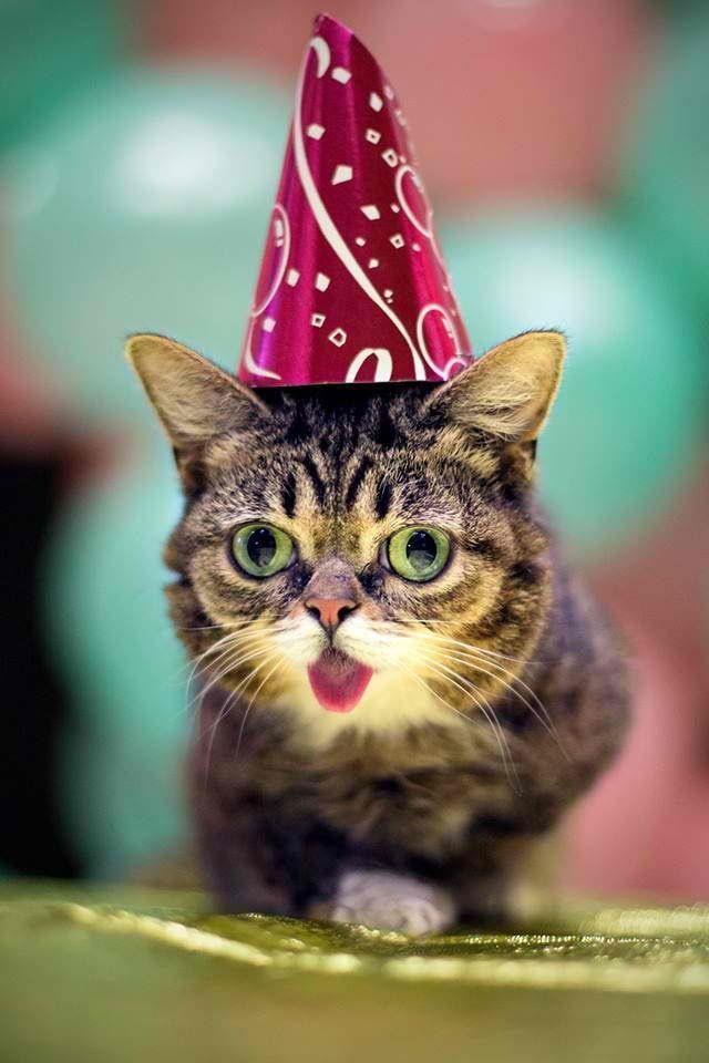 herpes virus in cat