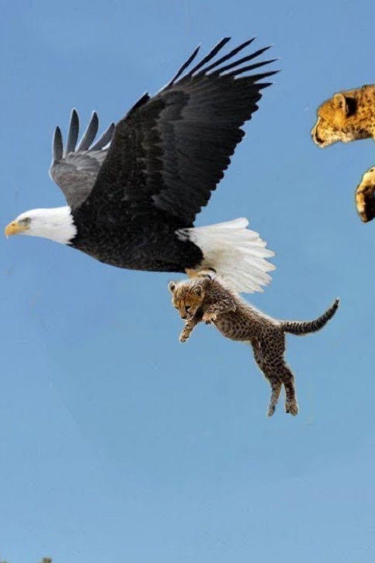 Wildlife Cat Pet Supplies Pet Fox Golden Retriever Dog Breeds