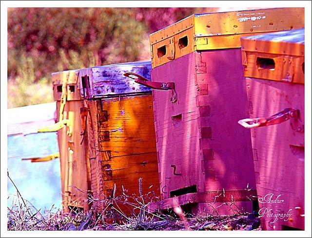 Pink & Orange beehives in Sithonia, Chalkidiki, Greece