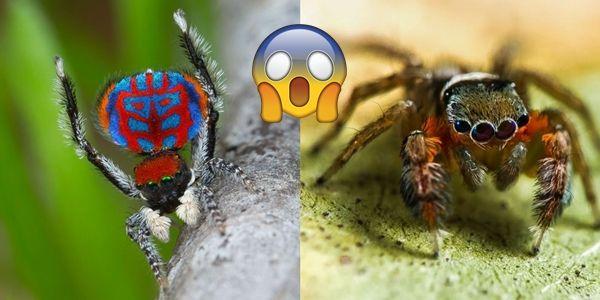 """Örümcek Rezervlerinin %582'sine Sahip Avustralya'da Keşfedilen 50 Yeni Örümcek Türü """"Örümcek Rezervlerinin %582'sine Sahip Avustralya'da Keşfedilen 50 Yeni Örümcek Türü""""  https://yoogbe.com/doga/orumcek-rezervlerinin-%582sine-sahip-avustralyada-kesfedilen-50-yeni-orumcek-turu/"""