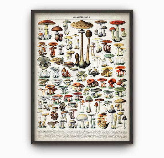 Mushroom Print - Vintage Larousse Mushroom Book Plate Print - Mushroom Illustration - Fungi Art - Fungus Poster - Botanical Science AB448  Printed