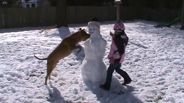 5 Dogs That Make Snow Days So Much Better: Here's a hilarious video of dogs that proves they make snow days so much better.