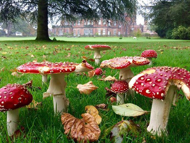 Capesthorne Hall, Siddington, Macclesfield, Cheshire. England. UK. Travel. Caravanning. Caravan Park. Family. Holiday. Stately Home. Wedding Venue.