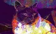 "New artwork for sale! - "" Sacred Birman Cat Adidas Breed Cat  by PixBreak Art "" - http://ift.tt/2vO48IJ"