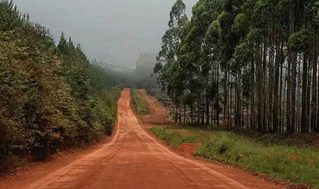 G road Magoebaskloof