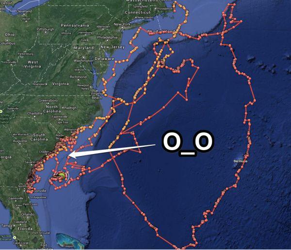 Best Great White Shark Tracker Ideas On Pinterest Big Great - Great white shark range us map