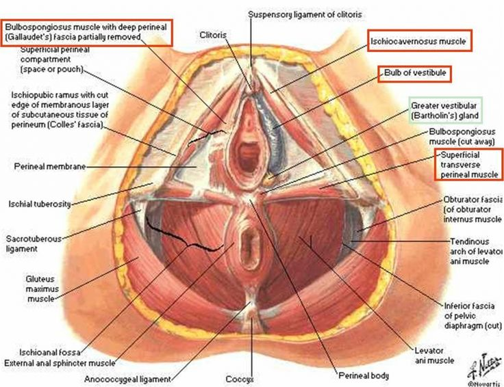 Pin by Karalee Bluhm on Hsfstructure   Human anatomy