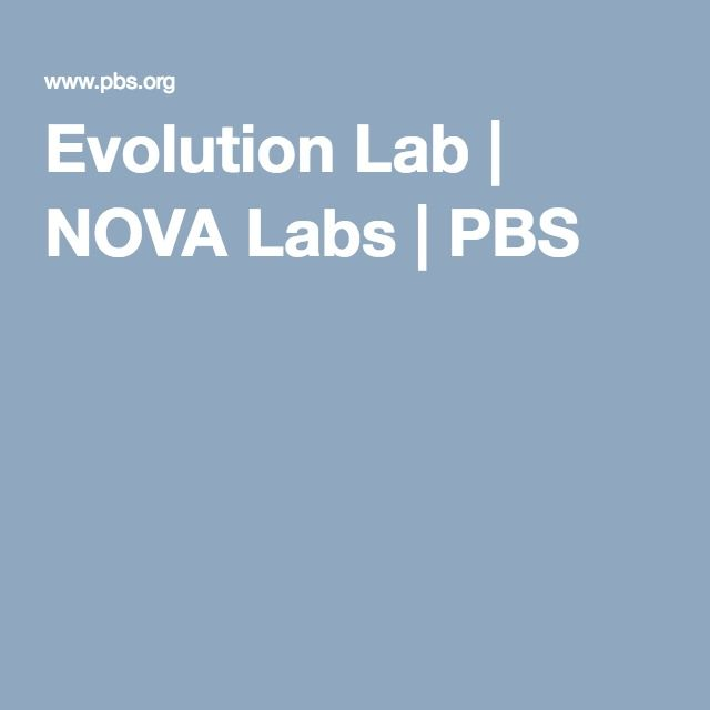 bio lab on evolution We have updated the lizard evolution virtual lab based on feedback from field testers (over 50 classrooms) the virtual lab includes four modules that investigate different concepts in evolutionary biology, including adaptation, convergent evolution, phylogenetic analysis, reproductive isolation.